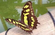 Het Butterfly Effect in mobiliteit